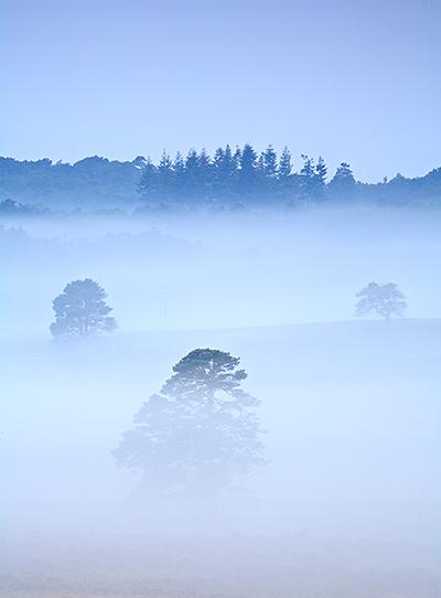 Spring Mist Holmsley #2
