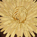 Dandelion Radiance
