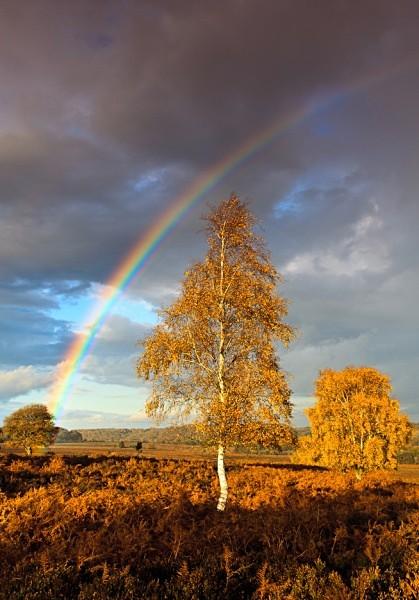 Rainbow, Mogshade Hill 2