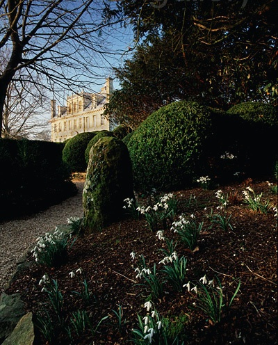 Snowdrops, Kingston Lacy