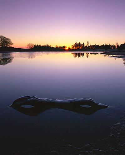 Winter Sunrise, Fritham Cross