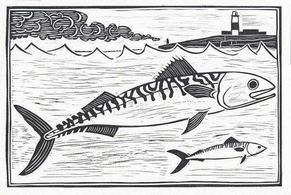 Mackeral, Portland Bill