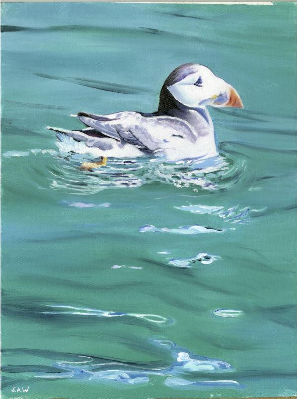 Swimming Puffin