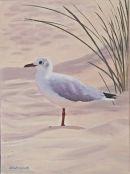 Sea Gull Studland