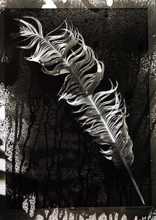 SOLD.Eagle Feather. Photogram.SOLD
