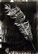 Feather. Photogram.