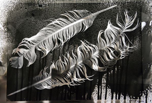 Feathers.Photogram.