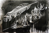 SOLD.Eagle Feathers.Photogram.SOLD