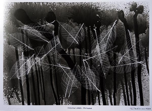 Skeleton leaves.Photogram.
