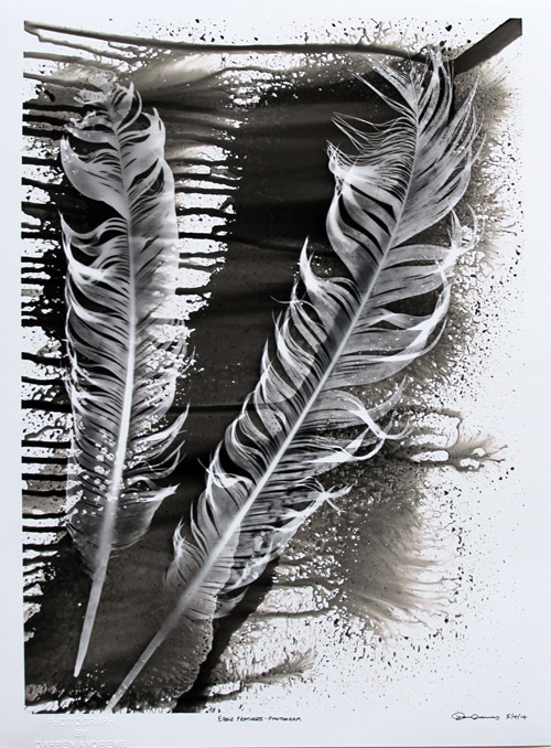 Eagle Feathers. PHOTOGRAM.