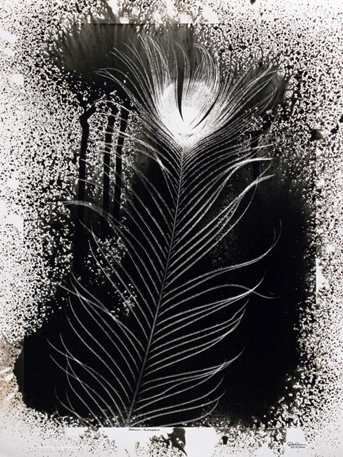 SOLD..Peacock Feather. PHOTOGRAM. SOLD.