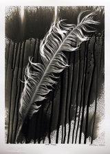 Eagle Feather. PHOTOGRAM.