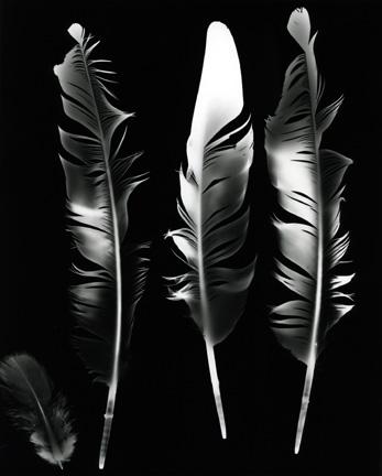 DARREN ANDREWS PHOTOGRAPHY: Racing Pigeon Feathers