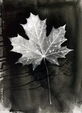Leaf Photogram