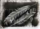 Eagle Feathers.