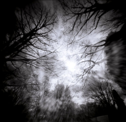 Trees, Pinhole.
