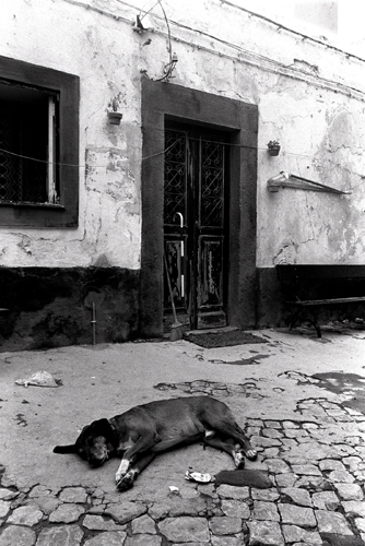 Sleeping Dog, Portugal.