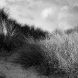 Maram Grass - Sandwood Bay