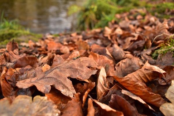 Fallen oak leaves, Grenofen , November 2017