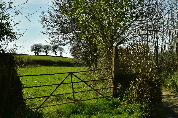 Gate and lane near Peter Tavy April 2018.