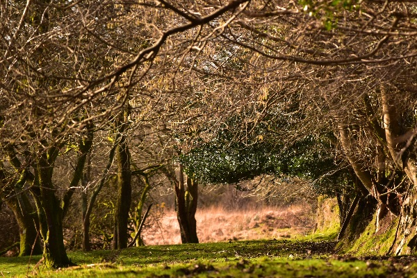 Trees near Whitchurch Down February 2018