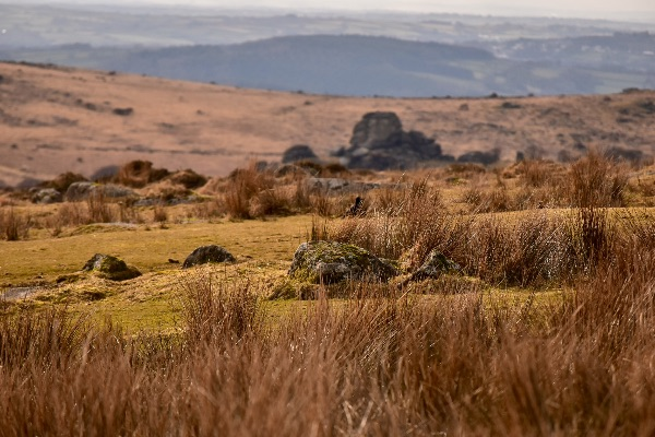 Vixen tor March 2018