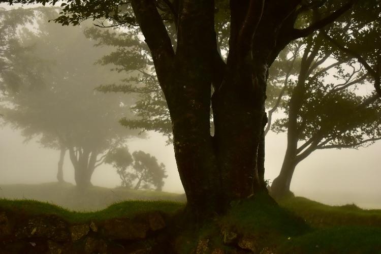 Mist at Fourwinds September 2018