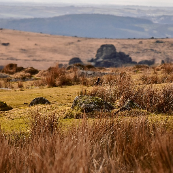 View of Vixen tor March 2018