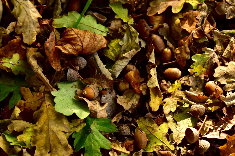 Autumn forest floor September 2019
