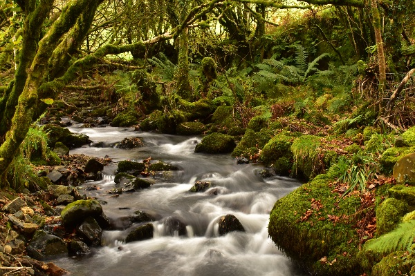 Stream at Creason woods, Dartmoor November 2017