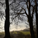 View through beeches, Brentor, January 2018