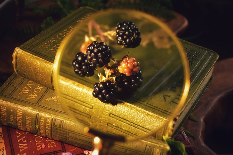 Blackberries and vintage books, still life.