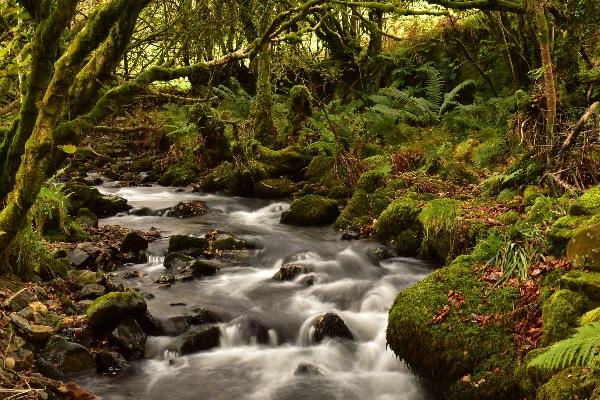 Stream near Creason woods, Dartmoor. October 2017