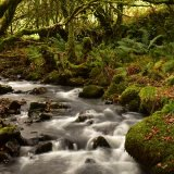 Stream near Creason woods, Dartmoor. October 2017