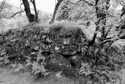 Dartmoor Stone Wall Near Burrator