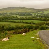 Sheep near Whitchurch down May 2017