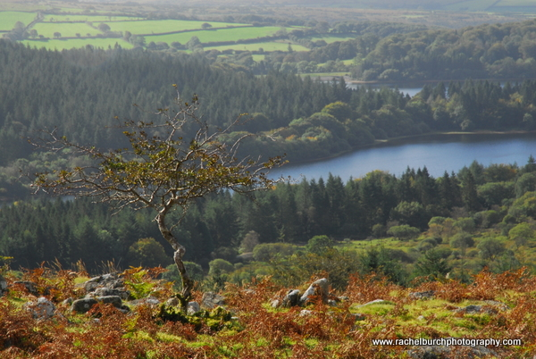 Hawthorn and Burrator, Dartmoor