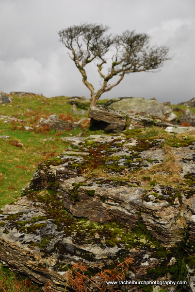 Hawthorn and Rock near Peek Hill