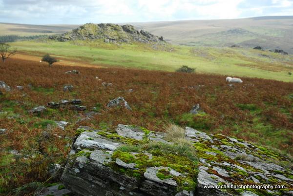Leather Tor Dartmoor