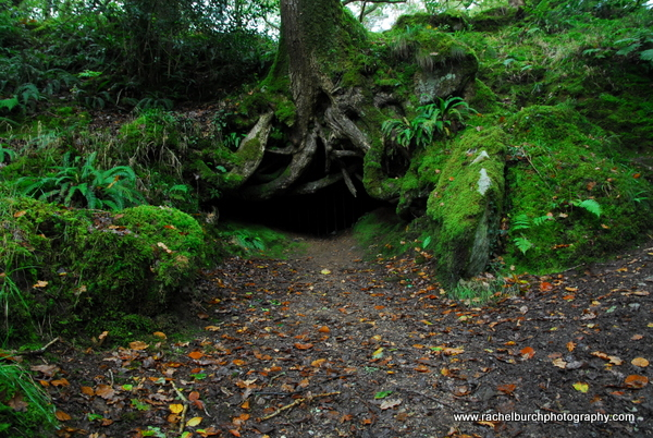 Entrance to mine shaft and oak Shaugh Prior Dartmoor