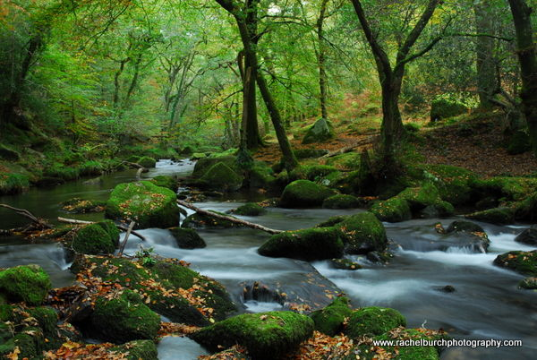 Autumn At Shaugh Prior Dartmoor
