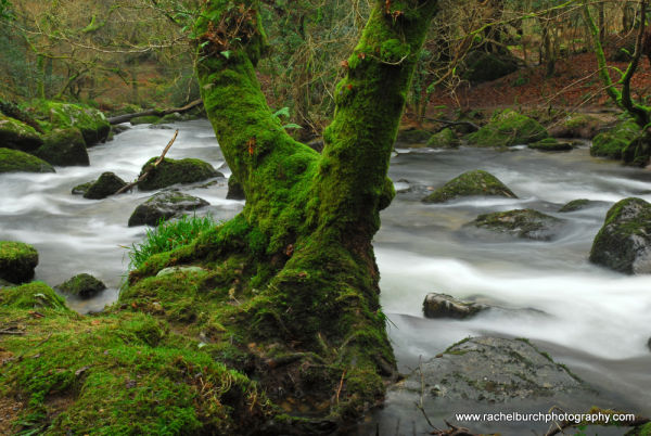 River Plym, Shaugh Prior January 2013