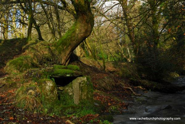 Well near Middlemoor Whitchurch Dartmoor