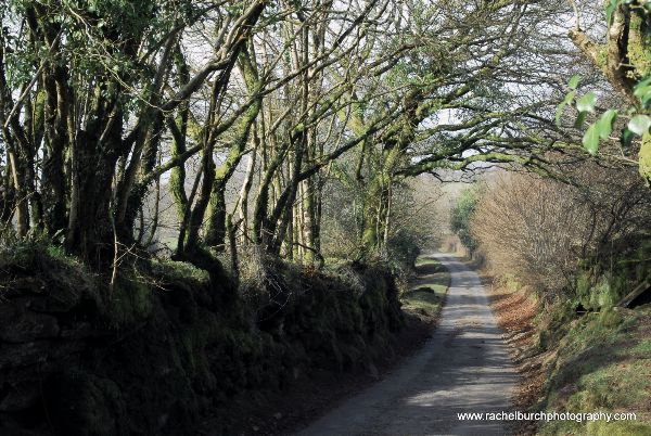 Lane near Sampford Spiney Spring 2013