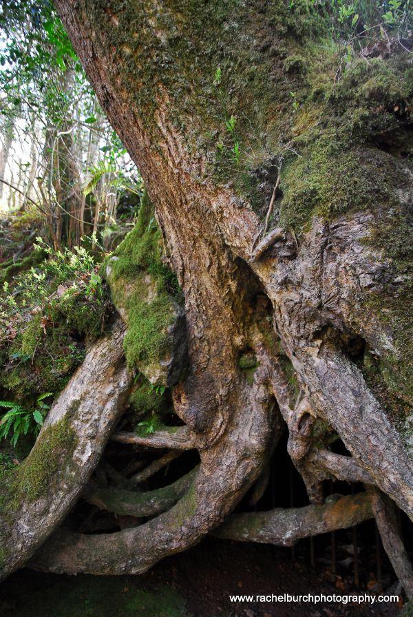 Roots in the Plym Valley Dartmoor
