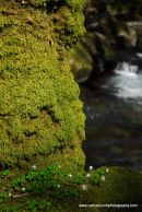 Mossy trunk and wood sorrel Plym Valley Devon