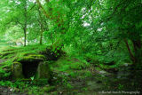 Middlemoor well Dartmoor