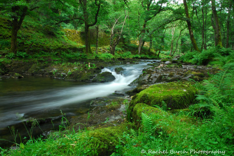 River Walkham Grenofen Woods West Devon