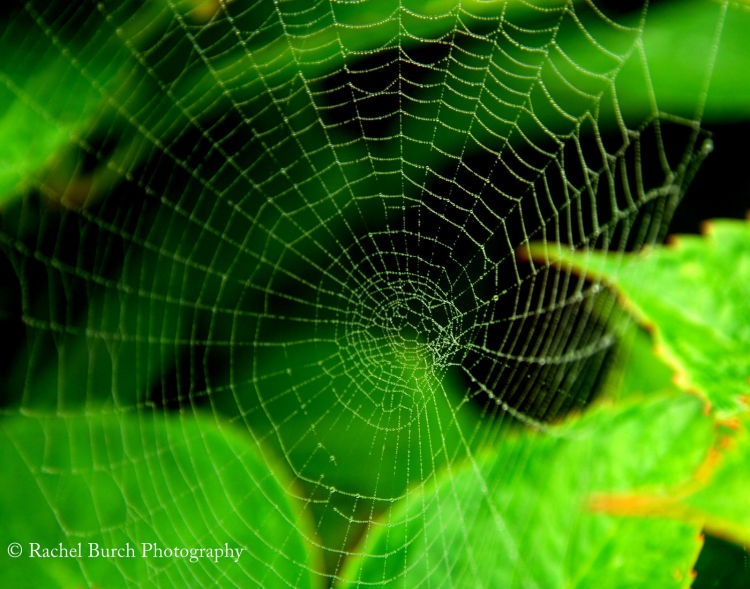 Green cobweb