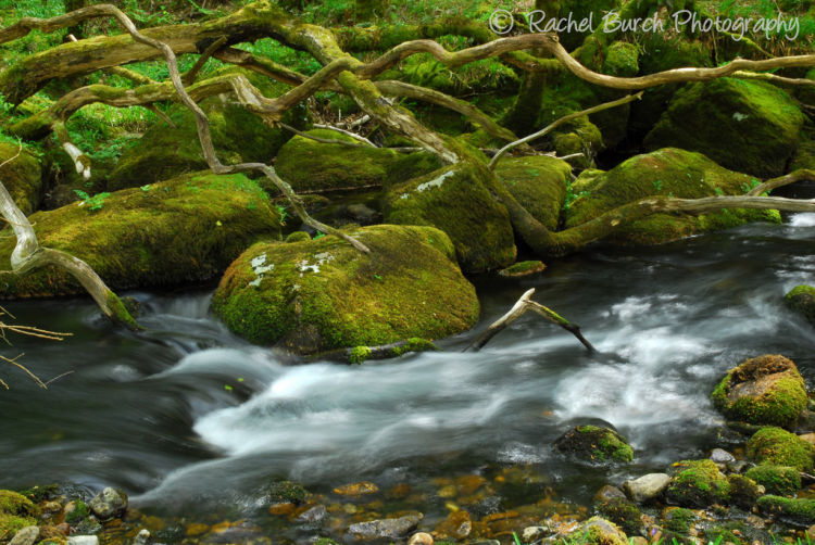 River Meavy near Burrator in Spring